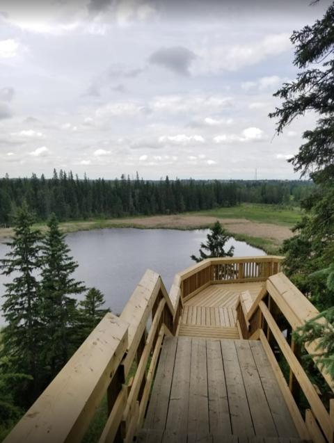 森の散策の紹介