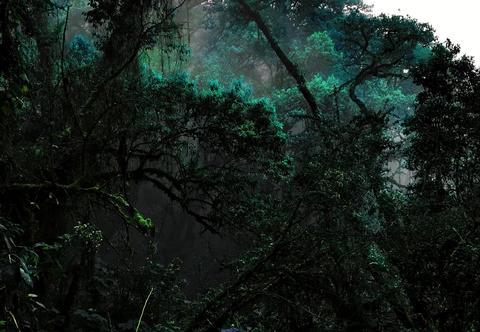 謎に満ちた森