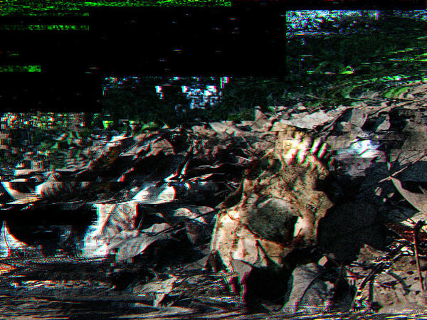 Skull Fragment.jpg